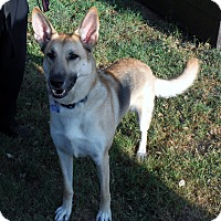 Adopt A Pet :: ROXANNE - SAN ANTONIO, TX
