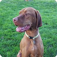 Adopt A Pet :: Danny - Bend, OR