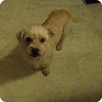Adopt A Pet :: Dani - West Warwick, RI
