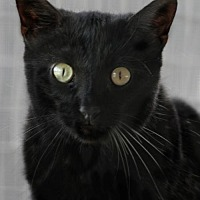 Adopt A Pet :: Louey - North Fort Myers, FL