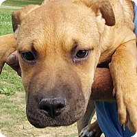 Adopt A Pet :: Madison - Colonial Heights, VA