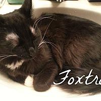 """Adopt A Pet :: Foxtrot - he's """"all boy"""" - Tucson, AZ"""