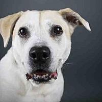 Adopt A Pet :: DIXIE - West Palm Beach, FL
