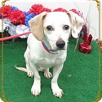 Adopt A Pet :: YAYO - Marietta, GA