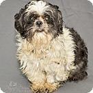 Adopt A Pet :: Banjo