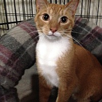 Adopt A Pet :: BRIAN - Ridge, NY