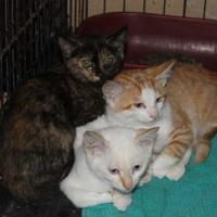Adopt A Pet :: Maggie - Russellville, KY