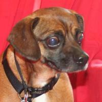 Adopt A Pet :: Bumper - Umatilla, FL
