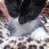 Adopt A Pet :: Reggie - Staten Island, NY
