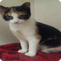 Adopt A Pet :: LULU - Fort Walton Beach, FL