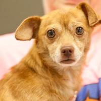 Adopt A Pet :: Shriek - Cartersville, GA