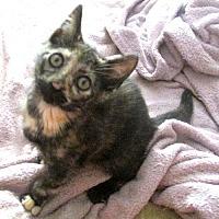 Adopt A Pet :: Serena - Norristown, PA