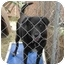 Photo 3 - Labrador Retriever Mix Dog for adoption in Fair Oaks Ranch, Texas - Jasper