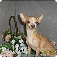 Adopt A Pet :: Penelope - Chandlersville, OH