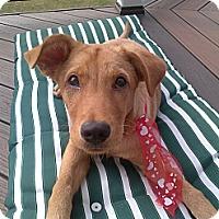 Adopt A Pet :: Baby Bear - Marlton, NJ