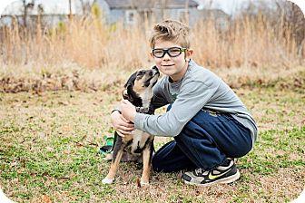 Chihuahua Mix Dog for adoption in Braintree, Massachusetts - Charlie - PENDING ADOPTION