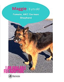 German Shepherd Dog Dog for adoption in Franklin, North Carolina - Maggie