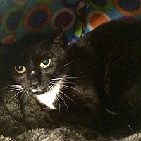Adopt A Pet :: Jiffy - Lunenburg, MA