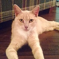Adopt A Pet :: Peaches - Lambertville, NJ