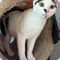 Adopt A Pet :: Moo - Alexandria, VA