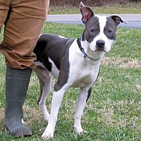 Adopt A Pet :: Sam - Batavia, OH
