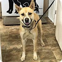 Adopt A Pet :: Leprechaun - Lewisburg, TN