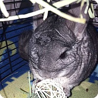 Adopt A Pet :: Willie - Patchogue, NY