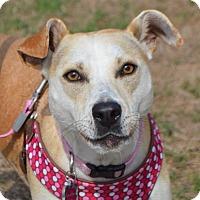 Adopt A Pet :: Missy - Seabrook, NH