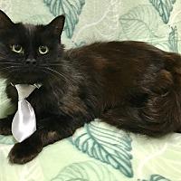 Adopt A Pet :: BENEDICT - Lexington, NC