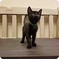 Adopt A Pet :: Freddy - St. Cloud, FL