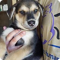 Adopt A Pet :: Mercury - Olympia, WA