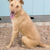 Adopt A Pet :: Honey Comb - Fort Lupton, CO