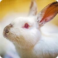 Adopt A Pet :: Hopper - Port Coquitlam, BC