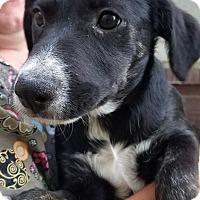 Adopt A Pet :: Sonja - Ogden, UT