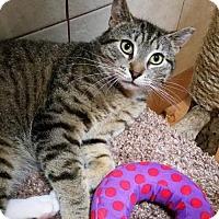 Adopt A Pet :: 17-047 Jackson (Jack) - York County, PA