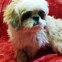 Adopt A Pet :: Annie - Oswego, IL