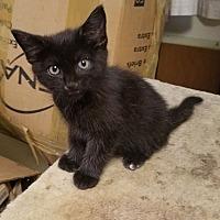Adopt A Pet :: Jester - East Brunswick, NJ