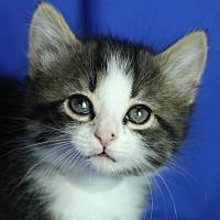 Adopt A Pet :: Onyx - Winston-Salem, NC