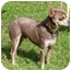 Photo 1 - Chihuahua Dog for adoption in Osseo, Minnesota - Boaz