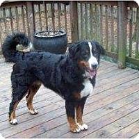 Adopt A Pet :: OBI - Southport, NC