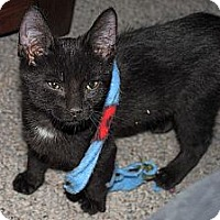 Adopt A Pet :: Bubba - Green Bay, WI
