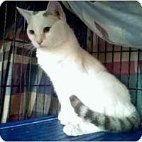 Adopt A Pet :: Suni - Fort Lauderdale, FL