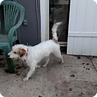 Adopt A Pet :: Colin - Simi Valley, CA