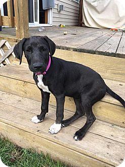 Hound (Unknown Type) Mix Puppy for adoption in DeForest, Wisconsin - Tiffany