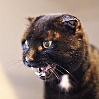 Adopt A Pet :: Joe Louis - Lincoln, NE