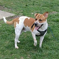 Australian Cattle Dog Mix Dog for adoption in Spring Valley, New York - RASCAL