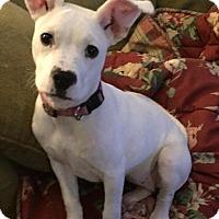 Adopt A Pet :: Chicken Nugget - McCalla, AL