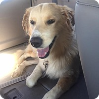 Adopt A Pet :: Daxx #0620 - Fort Worth, TX