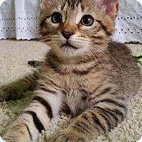 Adopt A Pet :: Moe - Edmond, OK