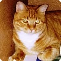 Adopt A Pet :: Nix - Casa Grande, AZ